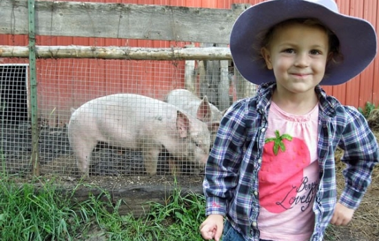 Caitlin-and-the-Pigs