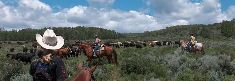 Horseback Riding & Cattle